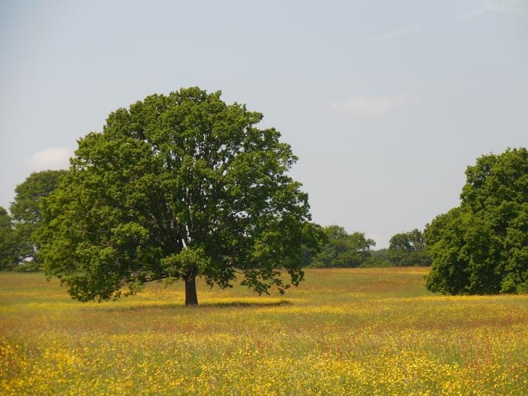 Windsor Great Park - Windsor, England
