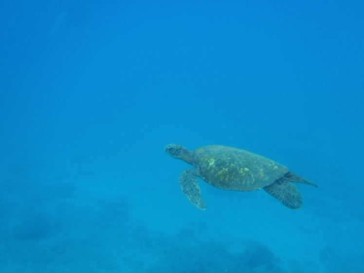 Snorkeling at Maui, Hawaii's Turtle Town