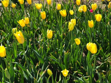 Cheekwood Botanical Garden - Nashville, Tennessee