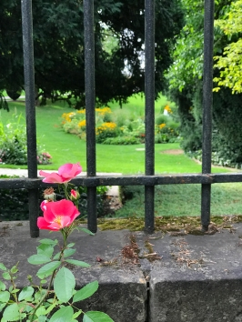 Flowers in Luxembourg City 2
